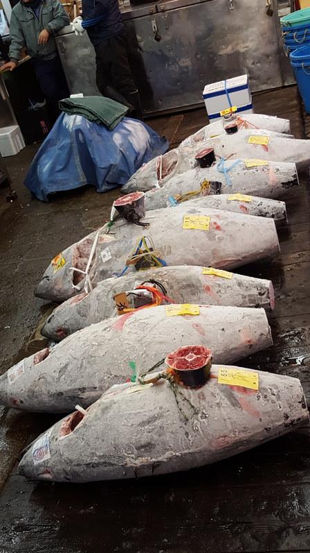 Tuna - Fish Market Tokyo